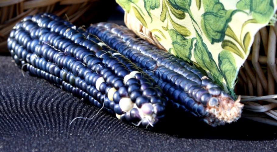 blue, corn